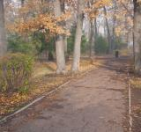 Free Photo - autumn park & fog