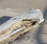Free Photo - Seashore tree trunk