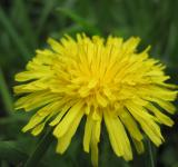 Free Photo - A yellow flower
