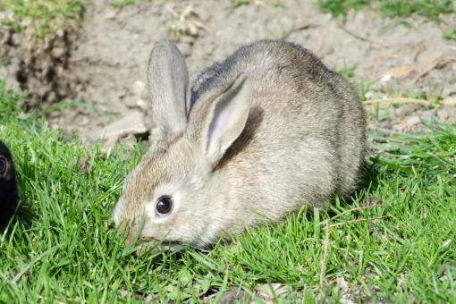 Rabbit - Free Stock Photo