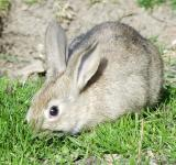 Free Photo - Rabbit