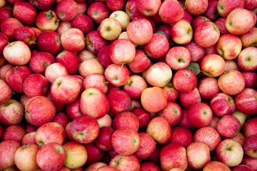 Red apples - Free Stock Photo