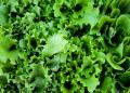 Free Photo - Green salad