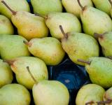 Free Photo - Green pears