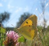 Free Photo - Yellow butterfly on a pink flower