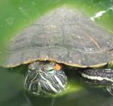 Free Photo - Turtle pet close-up