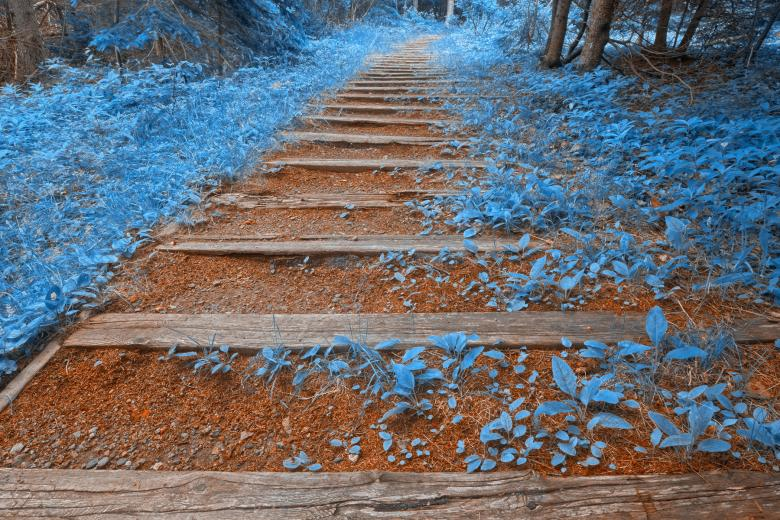 Free Stock Photo of Blue Forest Trail - HDR Created by Nicolas Raymond