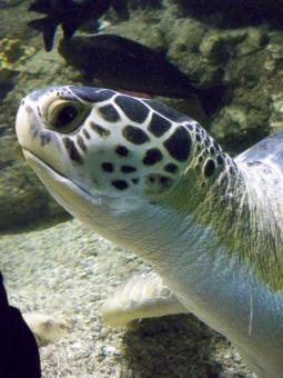 Curious Turtle - Free Stock Photo