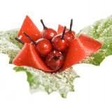 Free Photo - decoration european holly