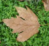 Free Photo - Autumn leaves on a green grass