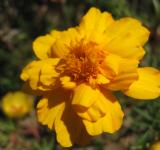 Free Photo - Macro of beautiful yellow flower