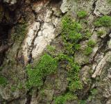 Free Photo - Moss on tree bark