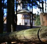 Free Photo - Church in the forest