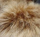 Free Photo - Artificial fur close-up