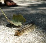 Free Photo - Fluffy Caterpillar