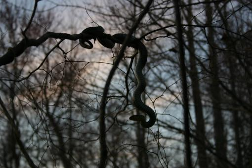 Shadow of the Tree Serpent  - Free Stock Photo