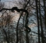 Free Photo - Shadow of the Tree Serpent