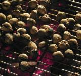 Free Photo - Barbecued Clams
