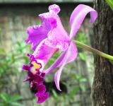 Free Photo - Pink Orchid
