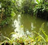Free Photo - Jungle River