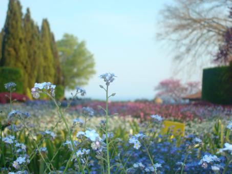 Little blue flower in a colorful garden - Free Stock Photo