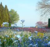 Free Photo - Little blue flower in a colorful garden