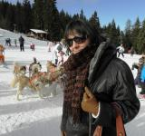 Free Photo -  Huskies in the mountain resort of Pampo