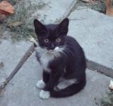 Free Photo - Little black and white kitten