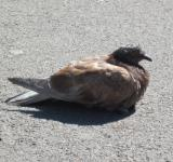 Free Photo - Resting pigeon