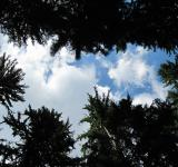 Free Photo - Sky and clouds through tree tops