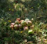 Free Photo - A pile of apples