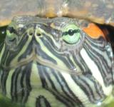 Free Photo - Turtle close-up