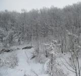 Free Photo - Snowy winter forest