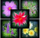 Free Photo - Flowers