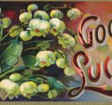 Free Photo - Vintage Good Luck Card