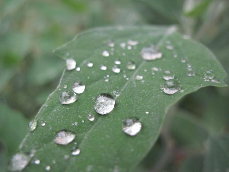 Free Stock Photo of Rain drops on a green leaf Created by Boris Kyurkchiev