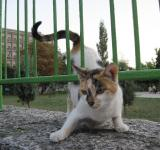 Free Photo - Playful street cat