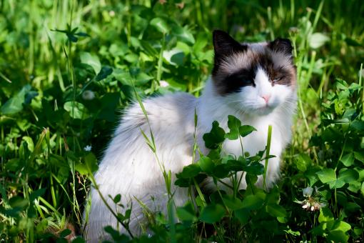 Cat in grass - Free Stock Photo