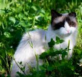 Free Photo - Cat in grass