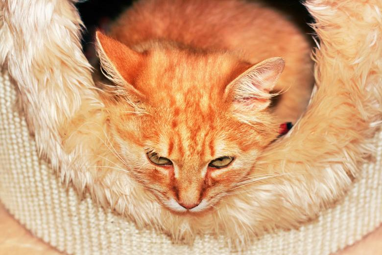 Free Stock Photo of Orange cat Created by 2happy