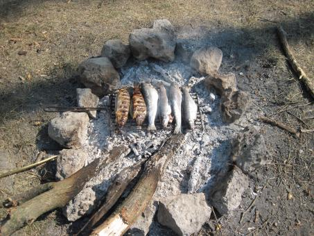 Trout fish on a barbecue - Free Stock Photo