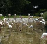 Free Photo - Flamingos