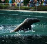 Free Photo - Sea lion show