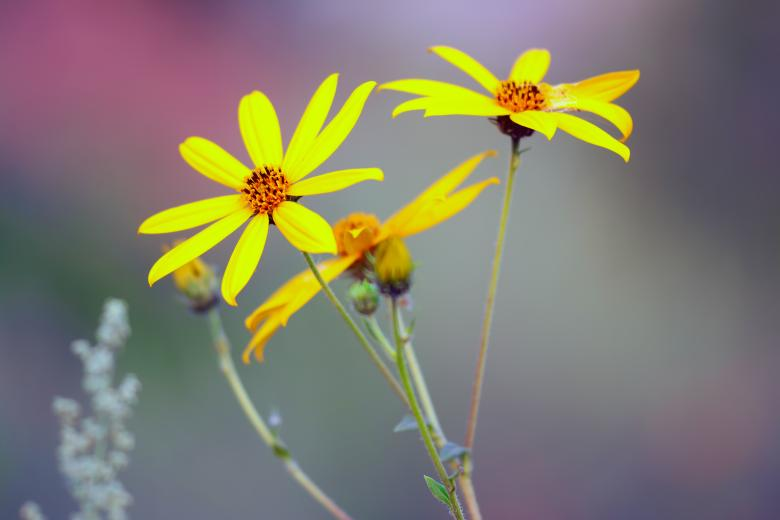 Free Stock Photo of Yellow wild flowers Created by 2happy