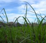 Free Photo - Grass in The Field