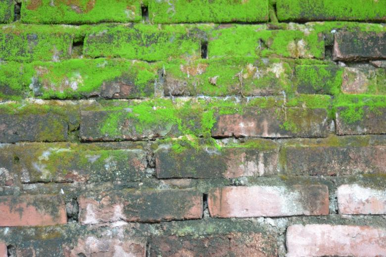 Free Stock Photo of Brick and moss wall texture Created by Ryan Jhoe