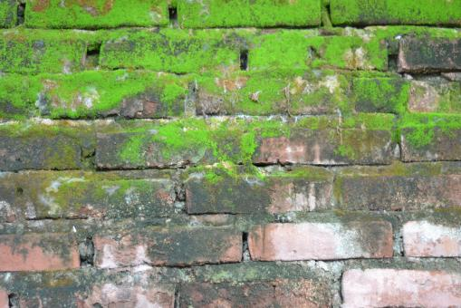 Brick and moss wall texture - Free Stock Photo