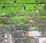 Free Photo - Brick and moss wall texture