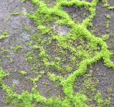 Free Photo - Moss in the wall