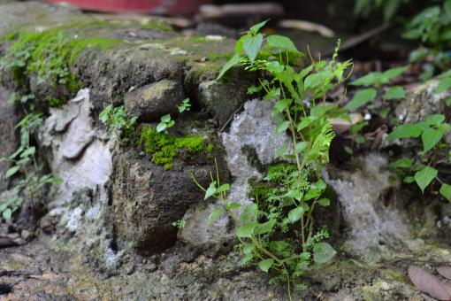 Rock and Vegetation - Free Stock Photo